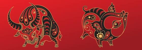 Kineski horoskop - Bik i Svinja